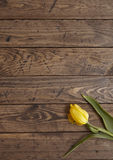 Tulip on wood. Yellow tulip on a wooden background Stock Image
