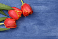 Tulip on wooden table Royalty Free Stock Photo