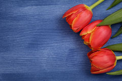 Tulip on wooden table Royalty Free Stock Image