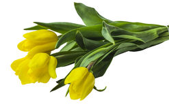 Tulip yellow bouquet Royalty Free Stock Photos