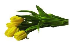 Tulip yellow bouquet Royalty Free Stock Image