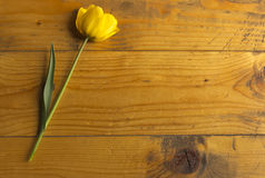 Tulip.Yellow tulip on a wooden surface Royalty Free Stock Photography