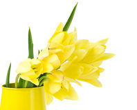 Tulip in a yellow watering can Royalty Free Stock Photos