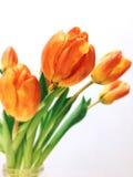 Tulipa amarela Imagem de Stock Royalty Free