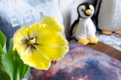 Tulipa amarela de florescência com o pinguim no fundo foto de stock