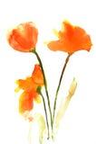 Tulipa bonita Fotografia de Stock Royalty Free