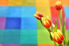 Tulipa bonita da mola em um fundo colorido Imagens de Stock