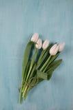 Tulipa branca na tabela de madeira azul fotografia de stock royalty free