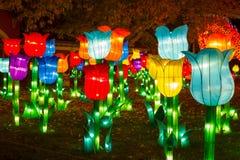 Tulipa chinesa do chinês do ano novo de ano novo de festival de lanterna Fotografia de Stock