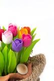 Tulipa colorida no flowerpod no saco Imagem de Stock Royalty Free