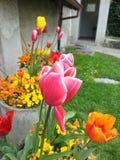 Tulipa cor-de-rosa em Castelo de Chillon Imagem de Stock