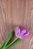 Tulipa cor-de-rosa em um fundo de madeira Fotografia de Stock