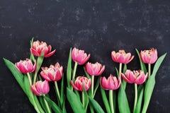 A tulipa cor-de-rosa floresce na opinião superior do fundo preto no estilo da configuração do plano Cartão para a mulher ou o dia Foto de Stock Royalty Free