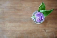 Tulipa de Violot de cima do foco criativo Fotografia de Stock Royalty Free