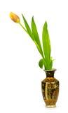 Tulipa em um vaso em um fundo branco Fotografia de Stock Royalty Free