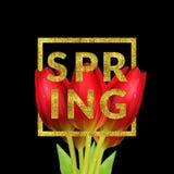 A tulipa floresce a composição Imagens de Stock