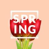 A tulipa floresce a composição Fotografia de Stock Royalty Free