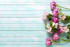 A tulipa fresca da mola florescem e as flores da árvore de maçã Fotografia de Stock