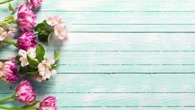 A tulipa fresca da mola florescem e as flores da árvore de maçã Imagens de Stock Royalty Free