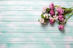 A tulipa fresca da mola florescem e as flores da árvore de maçã na turquesa Imagem de Stock Royalty Free