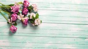 A tulipa fresca da mola florescem e as flores da árvore de maçã na turquesa Fotografia de Stock