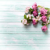 A tulipa fresca da mola florescem e as flores da árvore de maçã na turquesa Foto de Stock Royalty Free