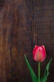 Tulipa no fundo de madeira Fotografia de Stock