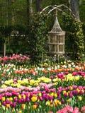 Tulipa no jardim fotos de stock royalty free