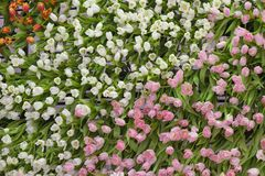 Tulipa Ramalhete bonito dos tulips imagem de stock