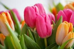 Tulipa Ramalhete bonito dos tulips Tulips coloridos Imagens de Stock
