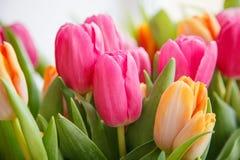 Tulipa Ramalhete bonito dos tulips Tulips coloridos Imagem de Stock Royalty Free
