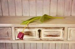 Tulipa roxa Fotografia de Stock