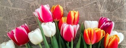 Tulipanów kwiatów wiązka na rocznik gazety tle Zdjęcie Royalty Free