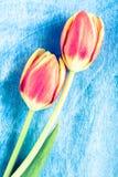 Tulipanów kwiaty Zdjęcie Stock