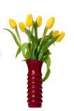 Tulipanów kwiaty Odizolowywający na Białym Backgrou Obraz Stock