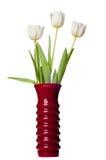 Tulipanów kwiaty Odizolowywający na Białym Backgrou Obrazy Stock
