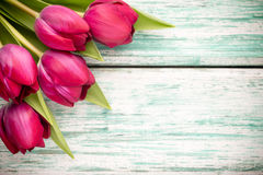 Tulipan. Zdjęcia Royalty Free
