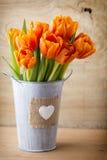 Tulipan Obraz Stock