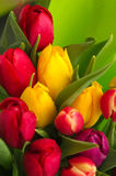 tulipan bukiet obrazy royalty free