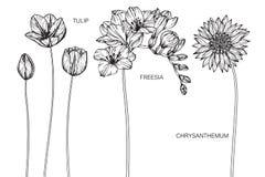 Tulipan, frezja, chryzantema kwitnie rysunek i nakreślenie ilustracja wektor