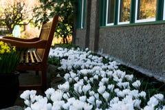 Tulipan i ławka obrazy royalty free