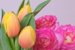 Tulipan i wzrastał Obraz Royalty Free