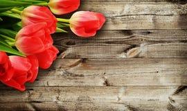 Tulipan kwitnie na ciemnym drewnianym tle Fotografia Stock