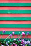 Tulipan kwitnie na drewnianym tle Obraz Stock