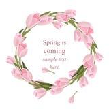 Tulipan kwitnie wianku kartka z pozdrowieniami Wiosna jest nadchodzącej akwareli wystroju wektoru realistycznym ilustracją royalty ilustracja