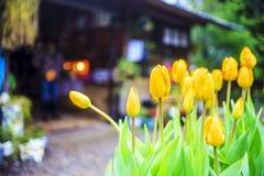 Tulipan piękne bukietów tulipanów tulipany kolor tulipany w s Zdjęcia Royalty Free