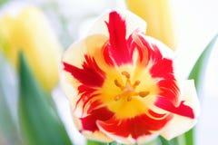 Tulipan piękne bukietów tulipanów tulipany kolor tulipany w s Obrazy Royalty Free