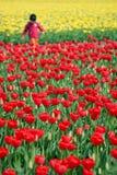 tulipan pola Obrazy Stock