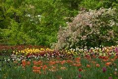 Tulipan sea. Beautiful tulip on a garden Stock Image