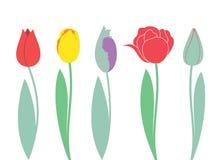 Tulipan Set ilustracja wektor